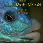 MalawiCichlids-insertRGB-French1